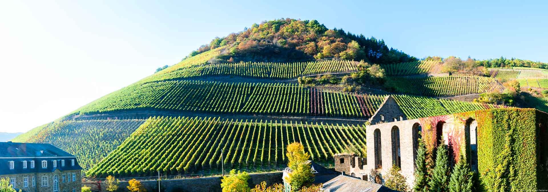 Hinter der alten Klosterruine erhebt sich der imposante Weinberg Marientaler Klostergarten. Auf diesem stehen vor allem Spätburgunder-Reben.