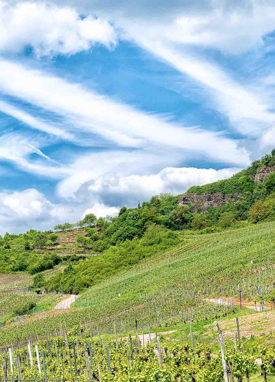 Ein Weg verläuft durch den Weinberg Nitteler Leiterchen. In der Mitte des Bildes befindet sich das obere Ende des Weinberges. Dort sind Bäume und der Dolomitfels. Am blauen Himmel sind weiße Wolken.
