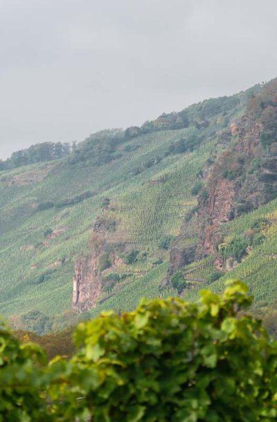 Im Vordergrund sind unscharfe Rieslingreben mit grünen Blättern. Im Hintergrund erheben sich die roten Felsen des Weinbergs Erdener Prälat unter grauem Himmel und Reben.