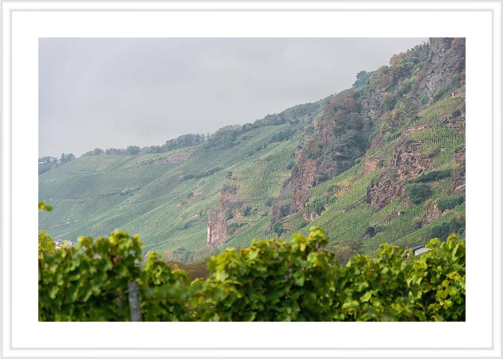 Bild mit weißem Holzrahmen und Passepartout: Im Vordergrund sind unscharfe Rieslingreben mit grünen Blättern. Im Hintergrund erheben sich die roten Felsen des Weinbergs Erdener Prälat unter grauem Himmel und Reben.