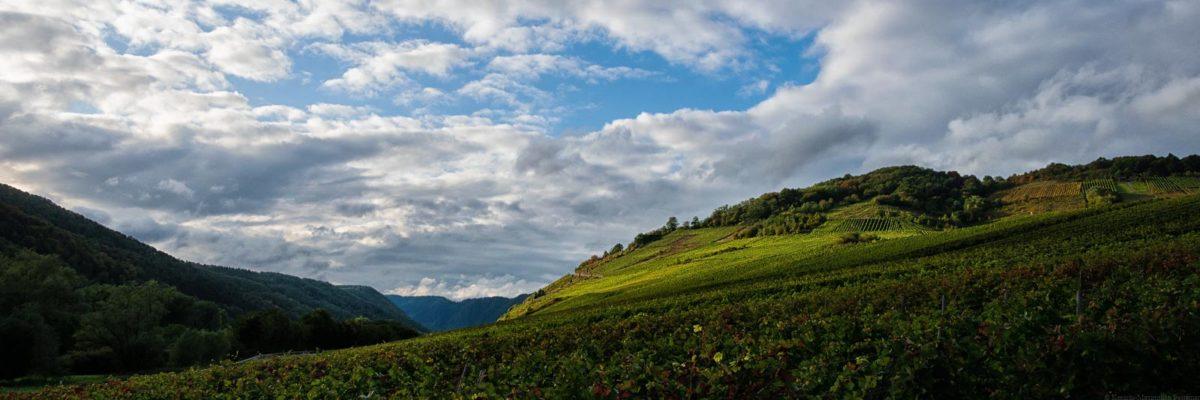 Der Nehrener Römerberg ist eine flache bis steile Lage. Weit im Hintergrund erblickt man den Bremmer Calmont.