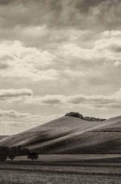 An der Saar ist der Wiltinger Scharzhofberg dank Egon Müller der berühmteste Weinberg. Vorne auf dem Bild erkennt man eine Wiese. Dahinter befindet sich der Weinberg mit den Riesling Reben. Am Himmel ist Wolken.