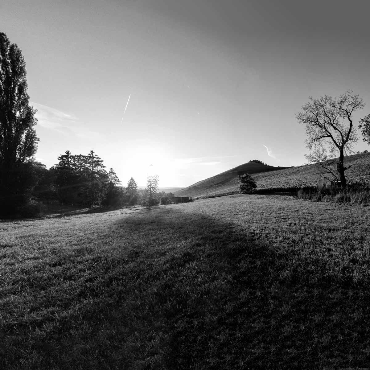 Foto in Schwarz und Weiß. Sonnenuntergang am Weinberg Wiltinger Scharzhofberger. Vorne ist eine Wiese. Links sind Bäume und der Scharzhof. Der Himmel ist rötlich und blau.