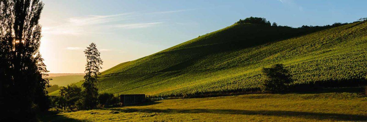 Sonnenuntergang am Weinberg Wiltinger Scharzhofberger. Vorne ist eine Wiese. Links sind Bäume und der Scharzhof. Der Himmel ist rötlich und blau.