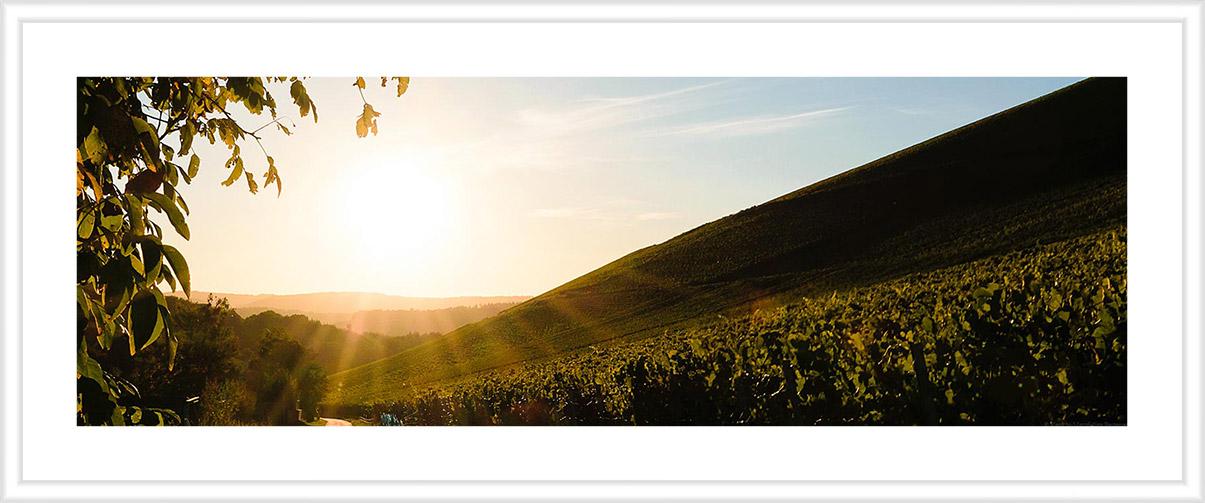 Bild mit weißem Holzrahmen und Passepartout: Auf der rechten Seite befindet sich der Weinberg Wiltinger Scharzhofberg, der ein Mythos ist. Vorne links verläuft eine geteerte Straße. Oben links sind Blätter und Äste eines Baumes. Am blauen Himmel im Hintergrund geht die Sonne unter. Auf der linken Seite liegt das Weingut von Egon Müller. Der Weinberg ist das Synonym für edelsüße Saar Rieslinge.