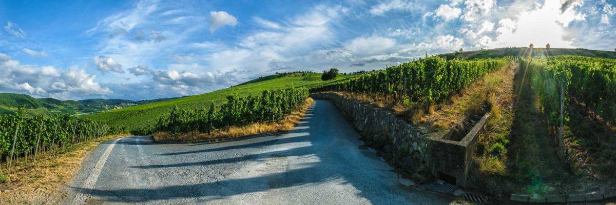 Eine Wegabzweigung im Weinberg Trittenheimer Altärchen unterteilt die Parzellen. Am blauen Himmel sind einige Wolken. Im Hintergrund sind weitere Weinberge mit Wald an den Hängen.
