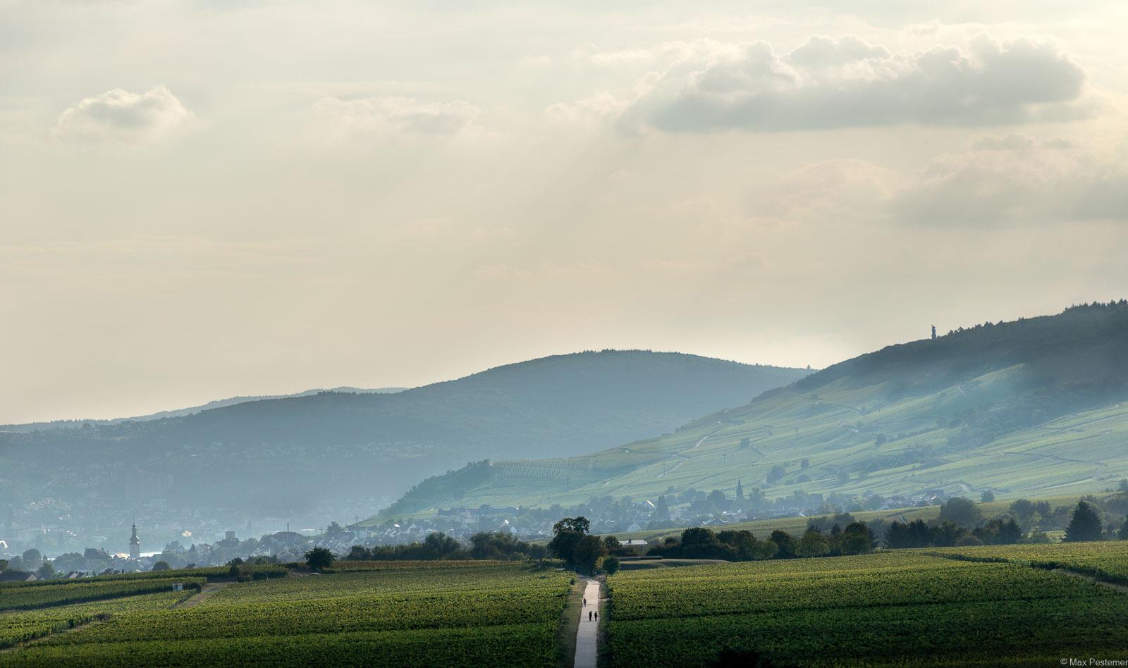 Auf dem Bild sind unten und im Hintergrund die Weinberge des Rheingau erkennbar. Am grauen Himmel befinden sich oben einige Wolken. Links unten im Bilden erkennt man den Rüdesheim an Rhein und einen Kirchturm. Das Bild wurde mit Bezug zu Bela Hamvas aufgenommen.