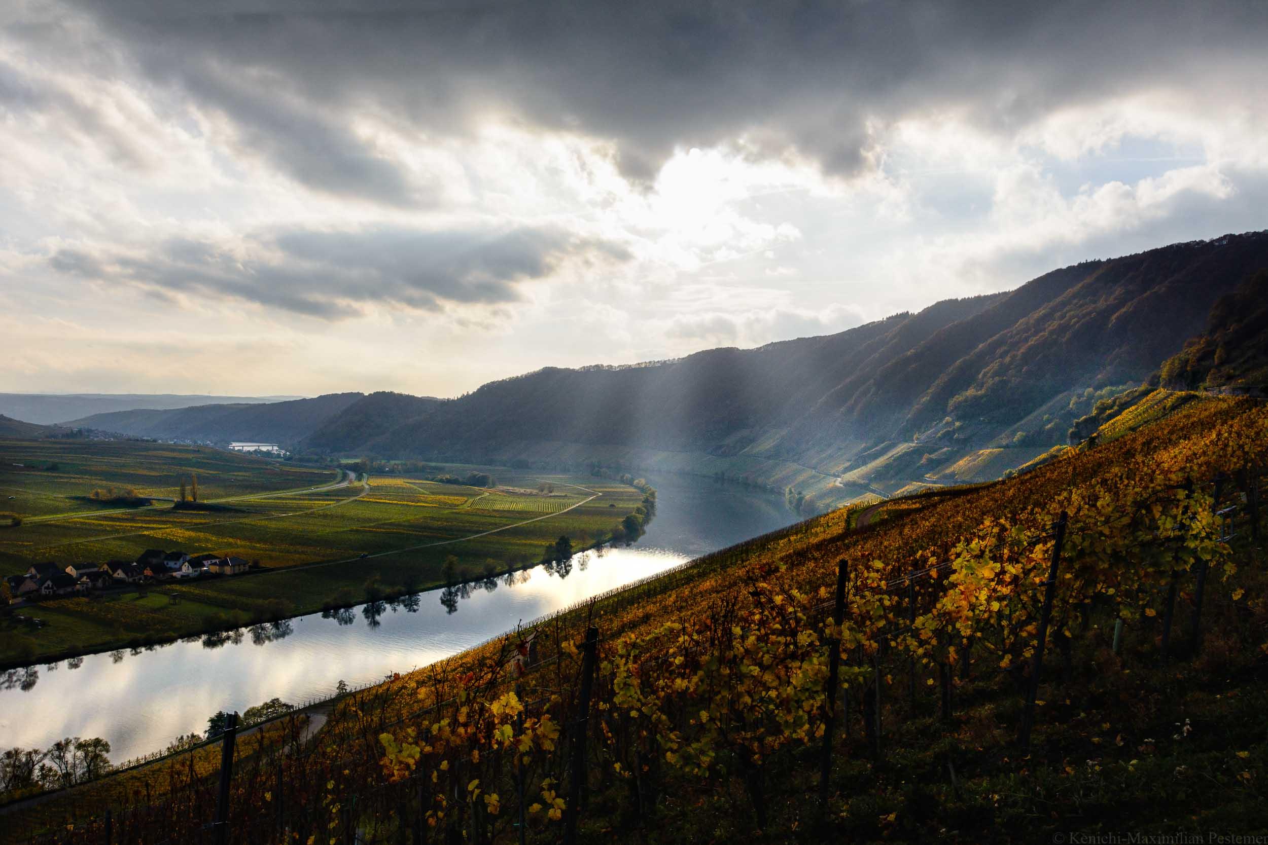 Piesporter Goldtröpfchen Weinberg am Ufer der Mosel im Herbst.