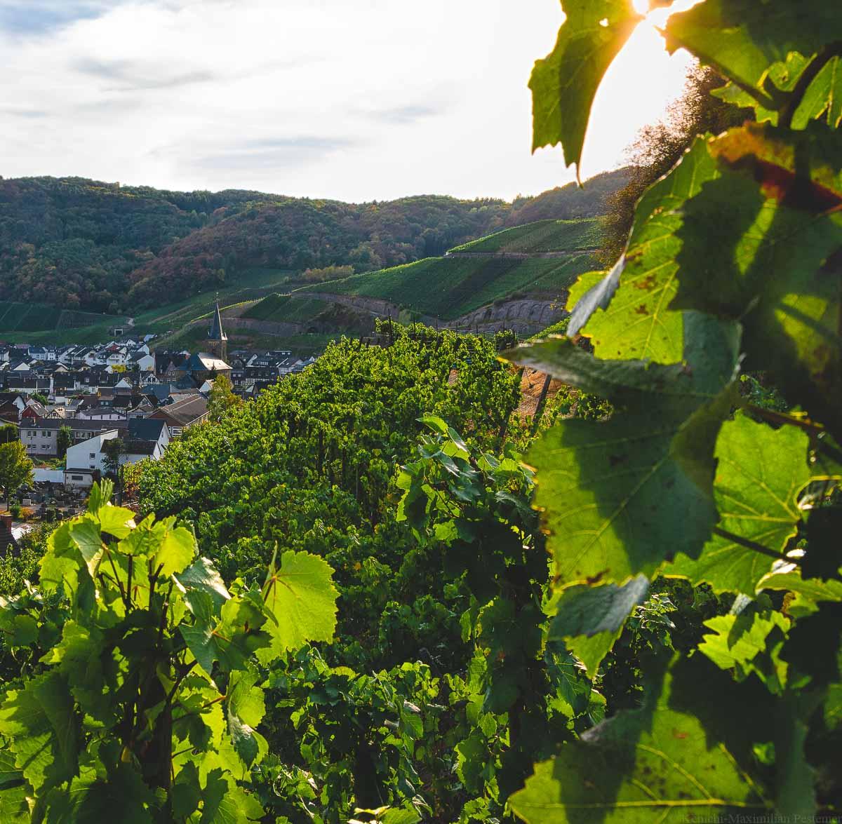Der Betrachter blickt auf die Weinberge des Ortes Dernau an der Ahr. Man erkennt die Einzellagen Dernauer Pfarrwingert im Vordergrund und Dernauer Schieferlay im Hintergrund.