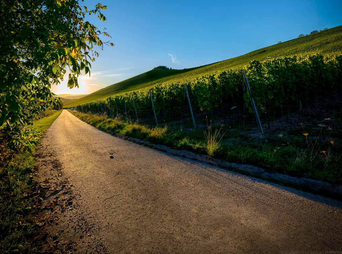 Auf der linken Seite befindet sich ein Baum. Links in der Mitte befindet sich ein Teerweg auf den die Sonne scheint. Auf der rechten Seite ist ein großer Weinberg. der Wiltinger Scharzhorberg. Die Sonnen geht am blauen Himmel unter.