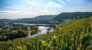 Im Vordergrund befindet sich ein Weinberg am Fluss Saar. Der Fluss Saar fließt unterhalb des Weinberges Saarfeilser Marienfels. Am linken Ufer liegt der Ort Schoden. Im Hintergrund sind bewaldete Hügel und der Ort Ayl.