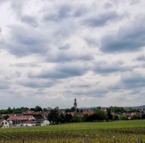 Man blickt auf einen Weinberg vor dem Ort Kirchheim an der Weinstraße in der Pfalz. In der Mitte des Bildes ragt ein Kirchturm heraus. Am dunklen Himmel sind Wolken.