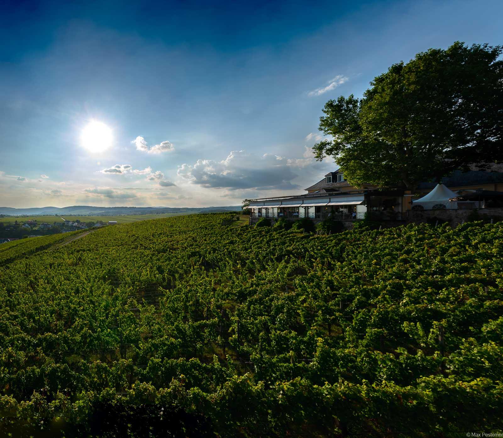 Man blickt vom Schloss Johannisburg auf die Weinberge des Rheingaus mit der Sonne am Himmel oben.